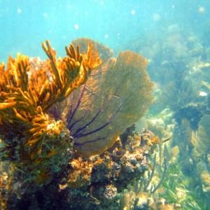 DSCF1966 colourful coral
