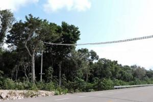 DSCN0198 monkey bridges across the toll highway