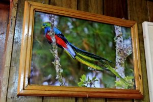 photo of a quetzal