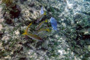 dscf5184-fish-24