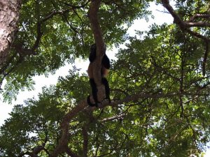 dscn5617-howler-just-hanging-around