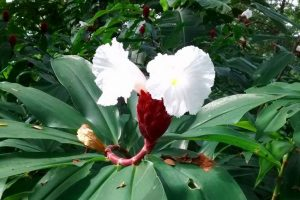 beautiful-flowering-shrub