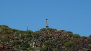 birds on cactus