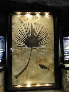rsz_dsc01445_fossils_in_rock_museum