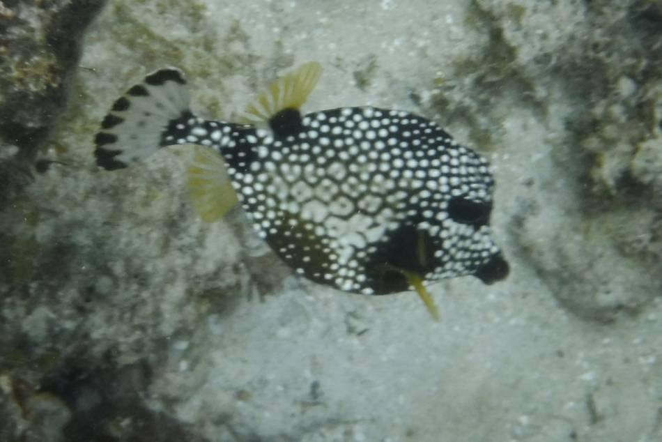 Calder escapes dscf5240 fish 37 for 104 7 the fish